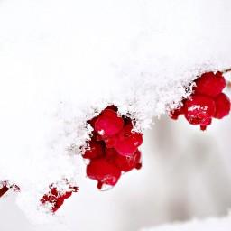 Crimson Covering
